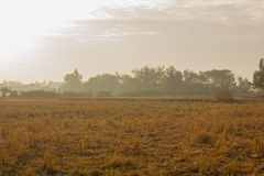 Trockene Reisfelder Lizenzfreie Stockfotos