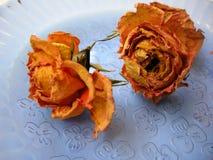 Trockene Rosen 89 auf blauer Platte Stockfoto