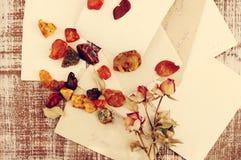 Trockene Rosen, bernsteinfarbig auf alten leeren Fotografien Geometrische Verzierung auf einem alten Papier stockfotos