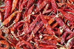 Trockene rote Paprikas. Lizenzfreie Stockfotografie