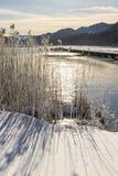 Trockene Schilfe auf einem gefrorenen See stockfotos