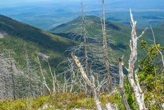 Trockene Stämme von Bäumen gegen den Hintergrund der Berge Stockfoto