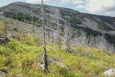 Trockene Stämme von Bäumen gegen Hintergrund der Berge Stockfotos