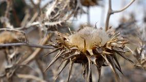 Trockene stachelige Blume Stockfotografie