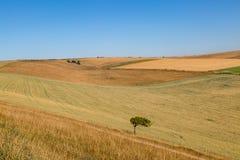 Trockene Sussex-Patchwork-Landschaft Lizenzfreies Stockfoto