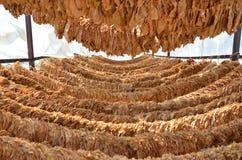 Trockene Tabakblätter Stockfoto