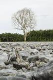 Trockene tote Bäume Stockfotos