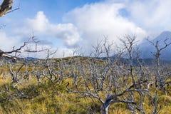 Trockene tote Bäume in einer Pampas stockfotos