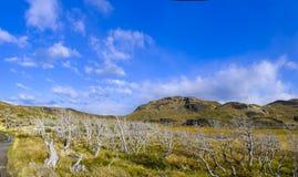 Trockene tote Bäume in einer Pampas lizenzfreie stockfotos