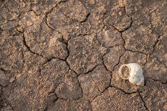 Trockene und gebrochene Erdbeschaffenheit Globaler Klimawandel Stockfotografie