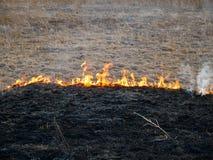 Trockene Vegetation auf Feuer, nachl?ssige Leute, welche die Vegetation am Fr?hjahr brennen lizenzfreies stockbild