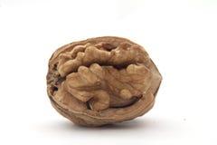 Trockene Walnussfrucht Stockbild