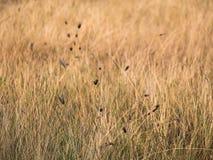 Trockene Wiese, hellbraun im Sommer Lizenzfreie Stockbilder