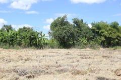 Trockene Wiesen des tropischen Waldes in Thailand stockbilder