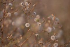 Trockene wilde Blumen stockfoto