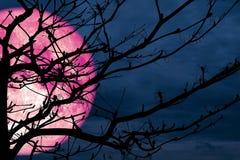 trockene Wolke der super vollen rosa Mondrückseitenschattenbildniederlassung Nacht Lizenzfreie Stockfotografie