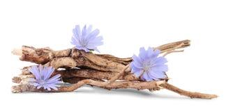 Trockene Wurzeln der Zichorie mit den Blumen lokalisiert auf Weiß stockbilder