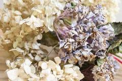 Trockene Zierpflanzen Stockbild