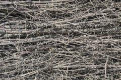 Trockene Zweige Stockbilder