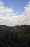 Trockene Zweige und Bäume, Carmel Mountains als Hintergrund, Himmel, Israel lizenzfreie stockbilder