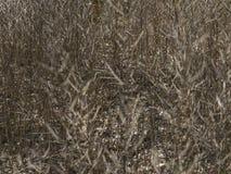 Trockener Adlerfarn im Winter Lizenzfreie Stockbilder