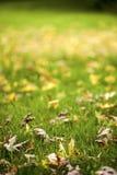 Trockener Autumn Leaves Nature Concept Stockbild