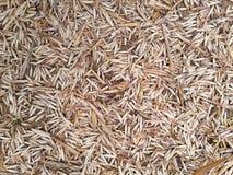 Trockener Bambusblumenfall auf dem Boden als Hintergrund Lizenzfreies Stockfoto