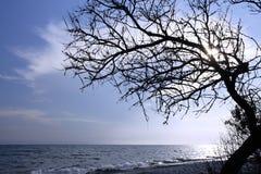 Trockener Baum über dem Meer Stockbild