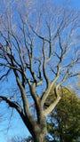 Trockener Baum Stockfotografie