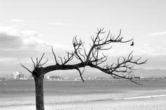 Trockener Baum Stockbild