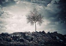 Trockener Baum Stockfotos