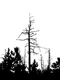 Trockener Baum Vektor Abbildung