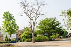 Trockener Baum Lizenzfreie Stockfotos