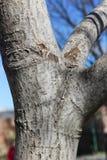 Trockener Baum auf blauem Himmel stockfoto