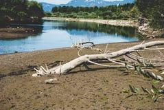Trockener Baum auf der Bank des Sees Stockbild