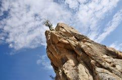 Trockener Baum auf die Oberseite von geologischen Felsformationen im Liebes-Tal Lizenzfreie Stockfotografie