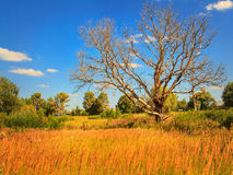 Trockener Baum auf einer sonnigen Wiese Stockfoto