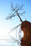 Trockener Baum auf Felsen stockfotografie