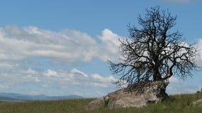 Trockener Baum auf Felsen, drakensberg stock abbildung