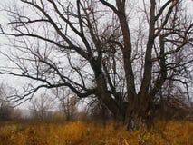 Trockener Baum auf Naturlandschaft Trockenes gelbes Gras Herbstsaisons stockfotos