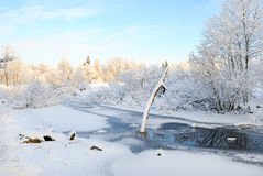 Trockener Baum bedeckt mit Schnee auf gefrorenem Teich Stockbilder