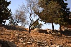 Trockener Baum in den Lehmfelsen Stockbilder