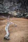 Trockener Baum in der Wüstenlandschaft wegen der Abholzung und der menschlichen Aktivität Lizenzfreies Stockbild