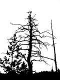 Trockener Baum des Schattenbildes Stockfotos