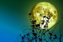trockener Baum des super Vollmondrückseitenschattenbildes und bunter Himmel Stockfotografie