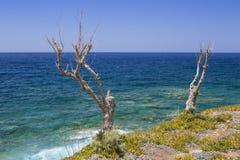Trockener Baum gegen das Meer auf der Küste von Kreta Lizenzfreie Stockfotos