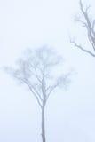 Trockener Baum im Nebel Stockfotografie