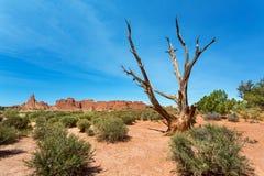 Trockener Baum im Tal Stockfotos