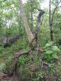 Trockener Baum im Wald, strukturierte Hintergrundtapete lizenzfreie stockfotografie