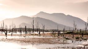 Trockener Baum mit See, Himmel und Berg Lizenzfreie Stockfotos